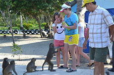 Wildlife thrives on Monkey Island