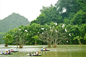 Idyllic Thung Nham mangroves offer bird watching paradise